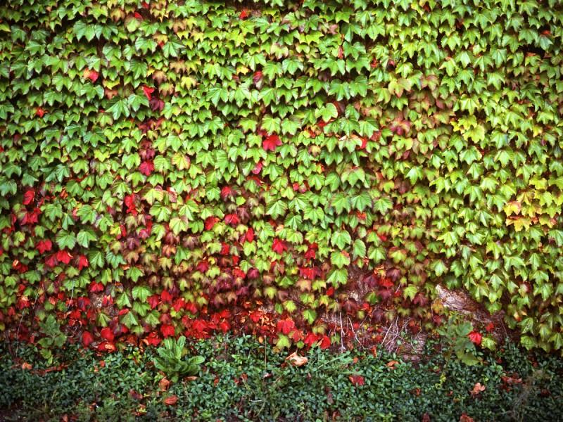Untitled, Chicago, 2009