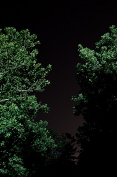 Untitled (Lincoln Park), Chicago, 2011